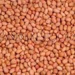 Loupané arašídy