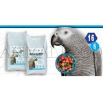 Micropills Grey Parrots