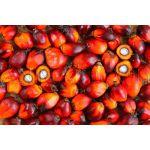 Palmové ořechy (Elaeis guineensis) 500g