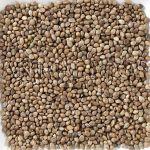 Deli Nature Konopné semeno 20kg